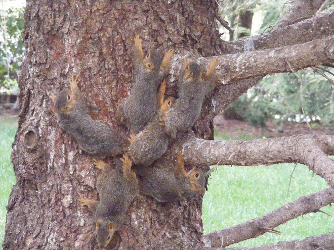 6 con sóc dính đuôi vào với nhau.