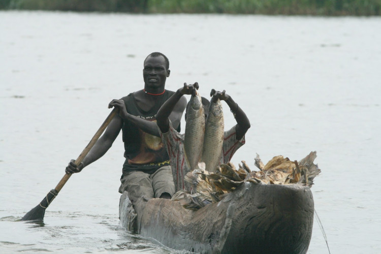 Bắt cá trong đầm lầy.