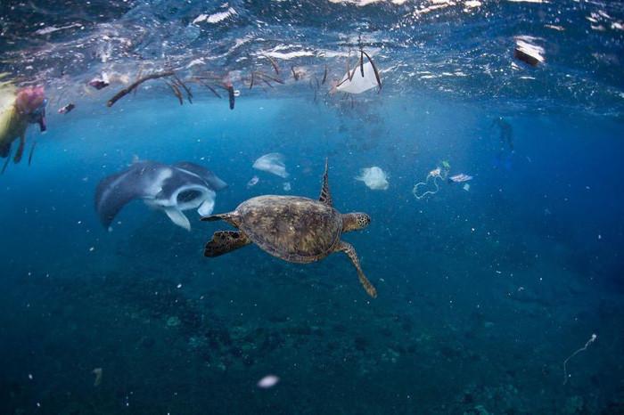 Sinh vật biển bị rác nhựa bủa vây