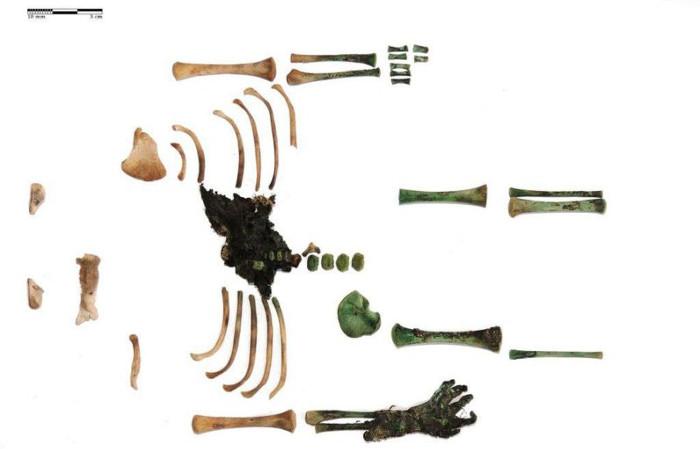 Phần còn lại của xác ướp hiện đang được trưng bày tại bảo tàng Mora Ferenc, Hungary.