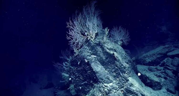 Các nhà khoa học ước tính những rạn san hô này đã lên tới cả trăm tuổi.