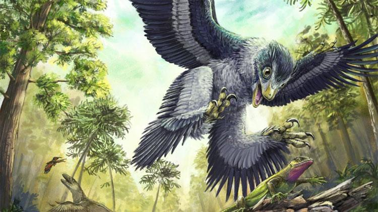 Các loài chim trước kia đều là khủng long.