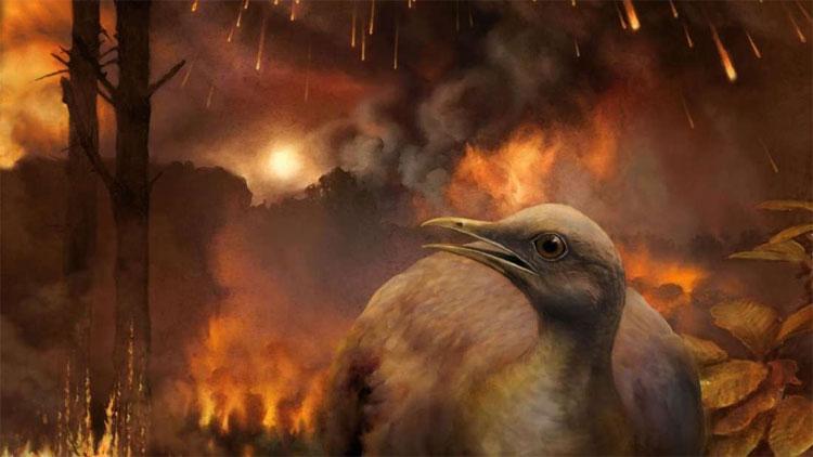 Những con chim sống sót đều thuộc loài không nhanh nhẹn, sinh sống chủ yếu trên mặt đất.