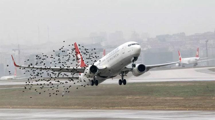 Ở độ cao khoảng 10.000m, máy bay còn có thể tránh va chạm với những đàn chim.