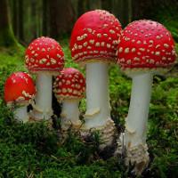 Cách nhận biết và phòng tránh nấm độc