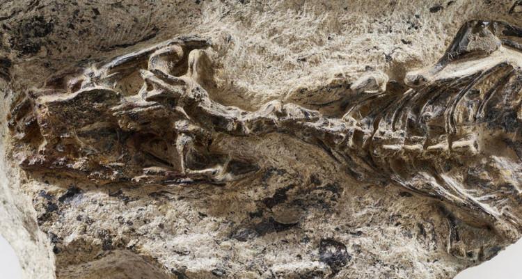 Đây là lần đầu tiên hóa thạch động vật được tìm thấy trên vùng đất này của Brazil.