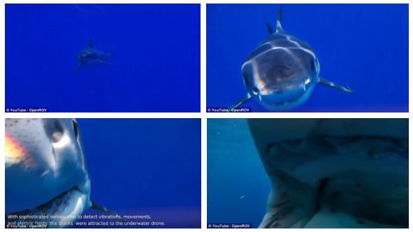 Bên trong miệng con cá: rất nhều bó cơ và răng.