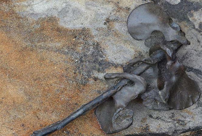 Các xương chậu của người được cắm lên cùng 1 cành cây khiến các nhà khoa học liên tưởng về một phong tục man rợ.