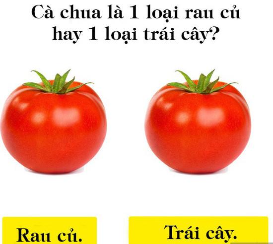 Cà chua là 1 loại rau củ hay trái cây?