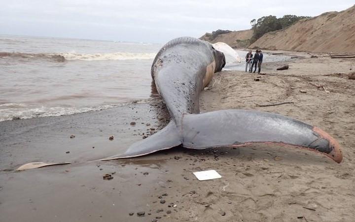 Cá voi chết trên bờ.
