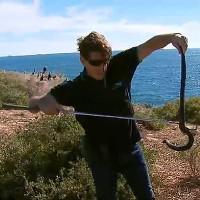 """Hòn đảo """"vương quốc của rắn độc"""" ở Australia"""