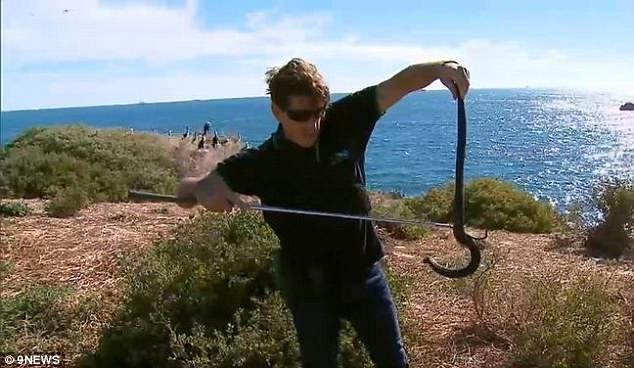 Tất cả bụi cây trên đảo Minuscule Carnac đều có rắn hổ sinh sống.