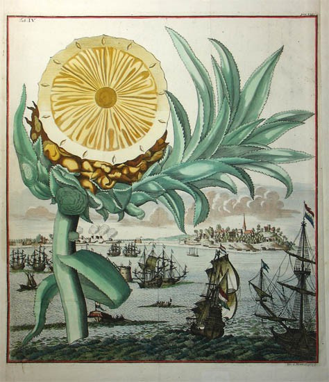 Hình minh họa của họa sĩ J.A Enter Sohn Und Errben, 1708.