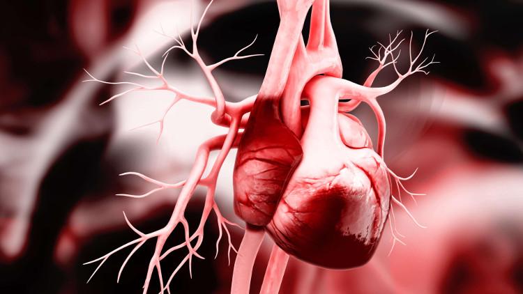Trước khi có phát hiện của các nhà khoa học Đức, khoa học vẫn chưa hiểu rõ về quá trình hình thành trái tim ở phôi thai