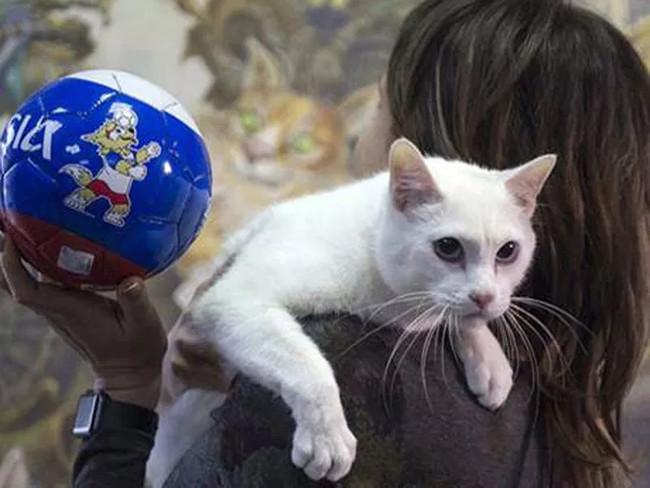 Chú mèo trắng ở Bảo tàng Emitajze vẫn còn nhút nhát và đang được huấn luyện để kế thừa bạch tuộc Paul.
