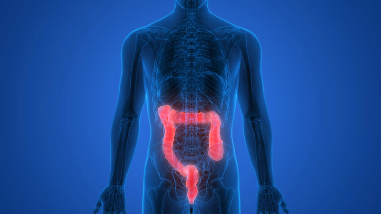 """Động vật có vú được cho là có thêm """"bộ não thứ hai"""" (gut brain) ở trong ruột."""
