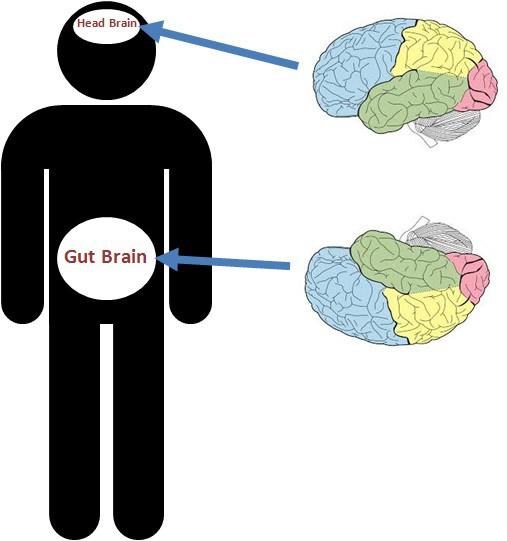 Con người có hai bộ não