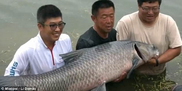 Trong suốt một tiếng vật lộn với con cá, ông Li bị nó kéo xuống nước 6 lần.