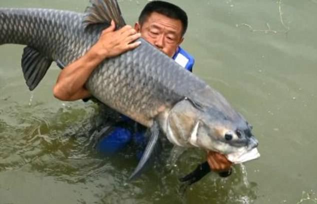 Con cá chép nặng 75kg vừa cắn câu của ngư dân Trung Quốc.