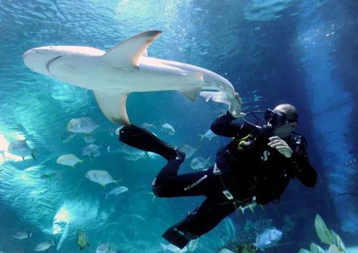 Cá mập không quan tâm đến việc gặp gỡ hoặc ăn chúng ta khi chúng ta ở trong lãnh thổ của chúng