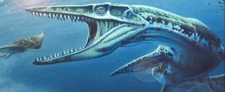 Có người thì cho rằng nó là một con cá chình khổng lồ.