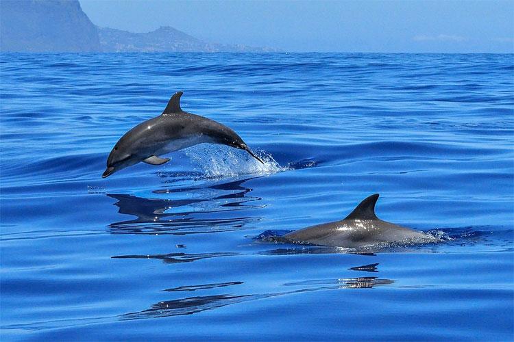 Cá heo giao tiếp với nhau bằng sóng âm.