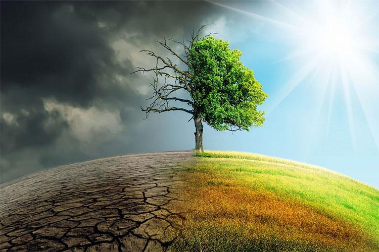 Từ loài tôm nhỏ bé, mà quá trình biến đổi khí hậu có thể bị tác động rất lớn.
