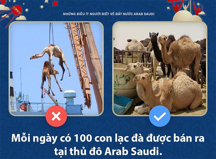 Thị trường... lạc đà lớn nhất thế giới