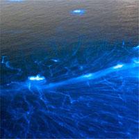 Hiện tượng kỳ dị trên biển xảy ra đã trăm năm nhưng khoa học chưa thể giải mã!