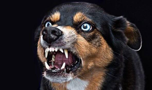 Chó dại là một trong những căn bệnh có tỉ lệ gây chết người cao nhất.
