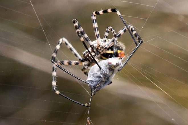 Thật may chẳng mấy loài nhện có độc đủ mạnh để gây ảnh hưởng đến sức khỏe của con người.