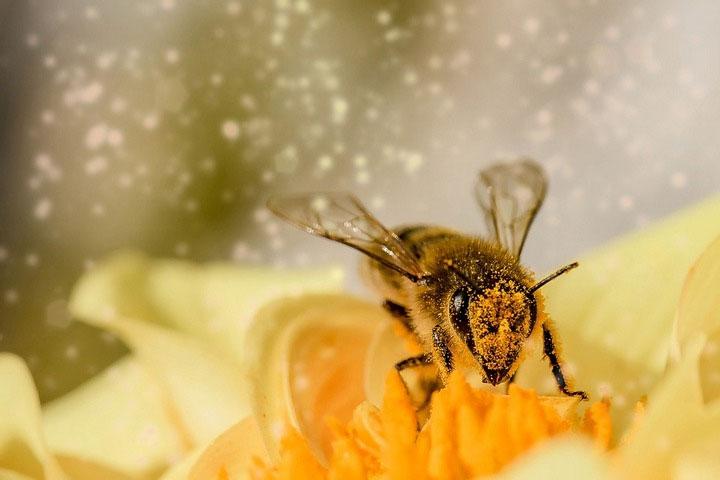 """Ong có thể là loài côn trùng đặc biệt hiểu được khái niệm phức tạp về con số """"0""""."""