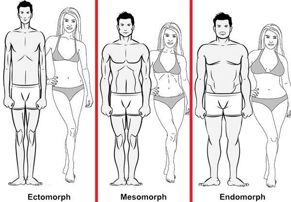 Ectomorph, Mesomorph và Endomorph.