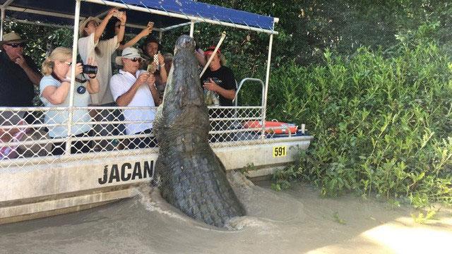 Cá sấu dài 6m chồm lên tấn công du khách...