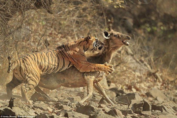 Nếu các loài động vật không có mối quan hệ ràng buộc trong chuỗi thức ăn, hệ sinh thái sẽ trở nên rất hỗn loạn.