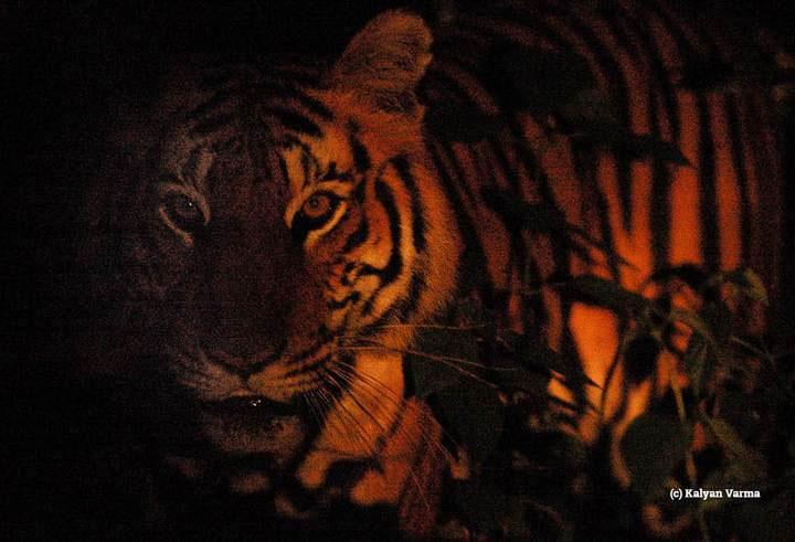 Thay đổi lối sống có thể ảnh hưởng nghiêm trọng tới khả năng sinh sản và quần thể các loài động vật.