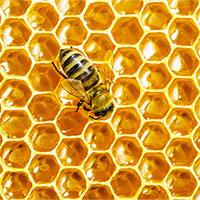 Mật ong được hình thành như thế nào?