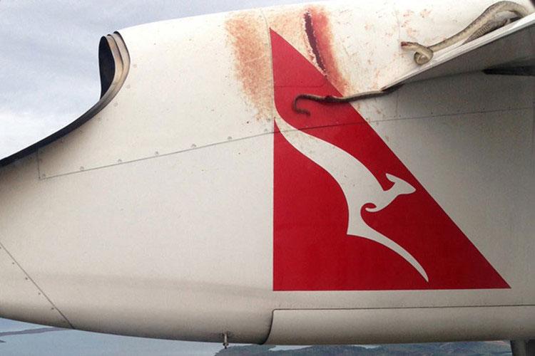 Một con rắn được phát hiện trên cánh của một chiếc máy bay phản lực