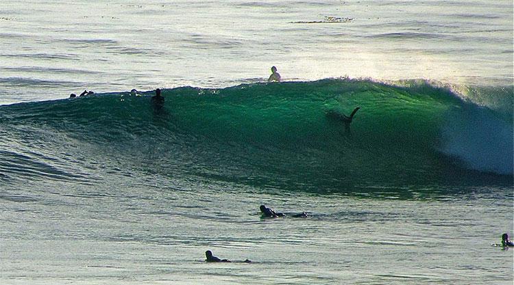 Ở Australia, bạn có thể bơi lội cùng rất nhiều con cá mập, đáng sợ hơn là có cả loài cá mập trắng lớn.