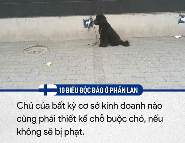Thiết bị buộc chó