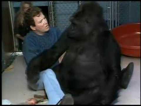 Nam diễn viên William Shatner và khỉ đột Koko trong một chương trình truyền hình mà cả hai cùng tham gia