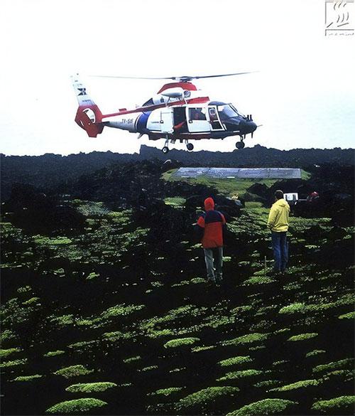 Loài thực vật tự nhiên đầu tiên được phát hiện trên Surtsey là rêu, rêu gần như xâm chiếm cả hòn đảo.