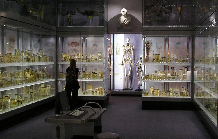Bộ xương của Charles Byrne trưng bày trong bảo tàng Hunterian.