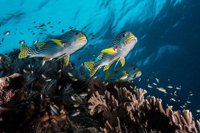Tubbataha có 600 loài cá và 360 loài san hô.