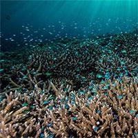 Rạn san hô thiên đường của Philippines vẫn vẹn nguyên dù thế giới đã lâm nguy