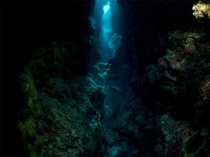 Thợ lặn bơi qua rạn san hô, tìm địa điểm quan sát thích hợp
