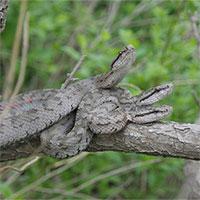 """Xà Đảo đáng sợ ở Trung Quốc: """"Hang ổ"""" của gần 20.000 con rắn lục cực độc"""