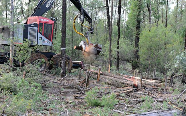Các hoạt động của con người là nguyên nhân chính dẫn đến tình trạng mất rừng.
