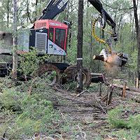 Choáng với lượng cây rừng mất đi trên Trái đất: 1 phút hụt 40 sân bóng đá