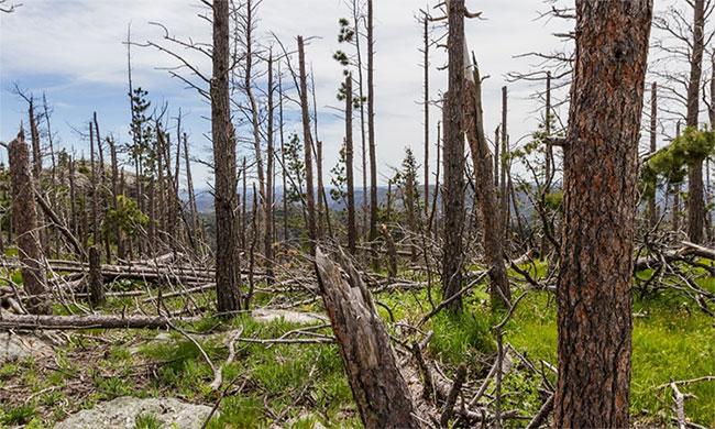 Lượng cây rừng mất đi mỗi phút trên Trái đất tương đương với 40 sân bóng của World Cup